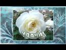 С ДНЕМ РОЖДЕНИЯ В ФЕВРАЛЕ Самое красивое поздравление Видео открытка