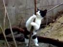 кошка стриптис танцует:::)))))