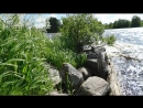 Река Онега.Каргопольский район.9322