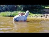 Купание лошадей - Водопад (Благовещенское)