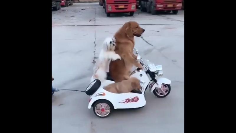поехали по городам и селам .....ведь год Собаки ......