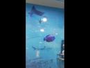Отделка ванной комнаты панелями ПВХ Подводный мир