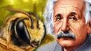 Что если пчелы исчезнут Предсказания Ванги и Эйнштейна