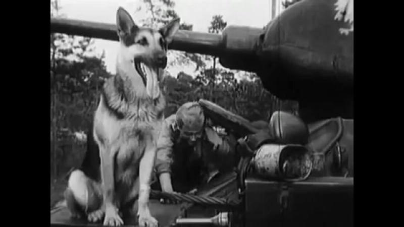 Клип на киносериал (Четыре танкиста и собака)