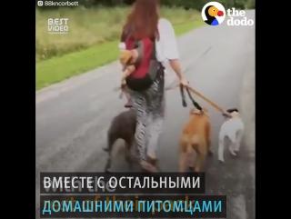 Малыш и домашние животные
