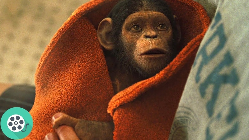 Уилл Родман приносит новорождённую обезьяну (Цезаря) к себе домой. Восстание планеты обезьян (2011)