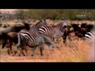 Путешествие на край света Кения ⁄ Travels to the Edge Kenya, Masai MaraLaikipia
