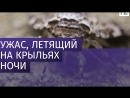 Мотыльки заполонили улицы Витебска