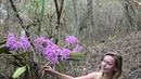 Cattleya maxima in situ Deutsch