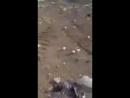 В Грузинском городе Марнеули на свалку выбросили множество яиц посчитав их испо