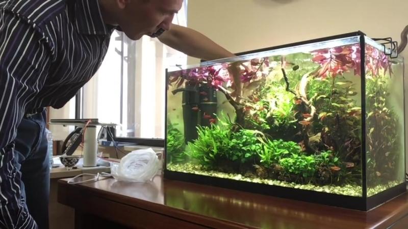 Уход за аквариумом. Ничего сложного)