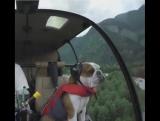 The best Co-pilot ?