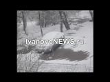 В Иванове дерево упало на женщину с ребенком