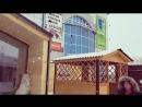Выставочная площадка на территории ЦЗД Усадьба каркасный дом, беседка, вольер для собак, баня и бытовка.
