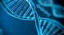 Поскреби РУССКОГО,найдешь ТАТАРИНА.Игры генетиков.ДНК.Кто ТЕБЯ сделал.Тайны Чапман
