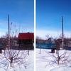 Обрезка деревьев в Самаре и области