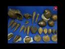 Окаменелые моллюски юрского периода