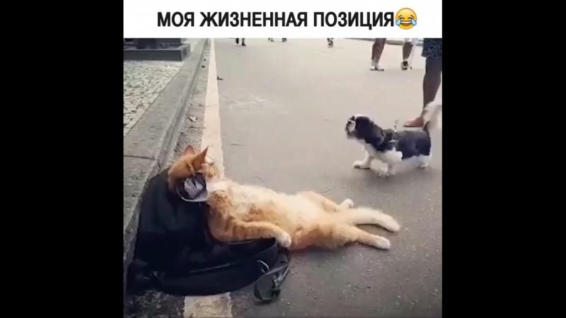 Кот пофигист)