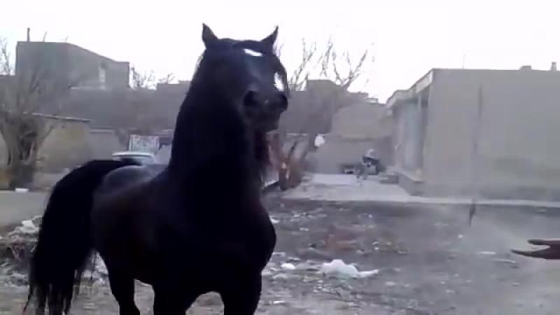 Какой красавец конь ему в поле а не на свалке, а цыгане