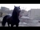 Какой красавец конь ему в поле а не на свалке а цыгане