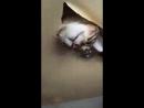 Котику нравится натяжной потолок)) А Вы ещё не заказали? Звоните!
