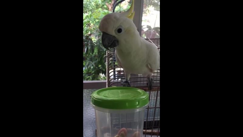 Попуги круто