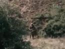 Х/ф «ДИКОЕ ПОЛЕ» (1991)