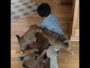 Милая стая щенят