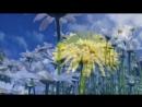 Шопен-красивая музыка..mp4