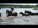 Белогривые лошадки
