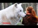 LOBOS GIGANTES – El Lobo mas grande del mundo – Los Lobos mas grandes del mundo