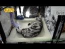 Международная выставка кошек, Харьков, 5 марта 2017, все кошки, часть 1