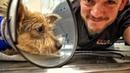 Собака потеряла лапу.Но не потеряла любовь к жизни и людям.Ветеринарное ранчо