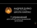 ☘ 5 упражнений от А. Дуйко Трясись и дыши ☘ Эзотерика Кайлас