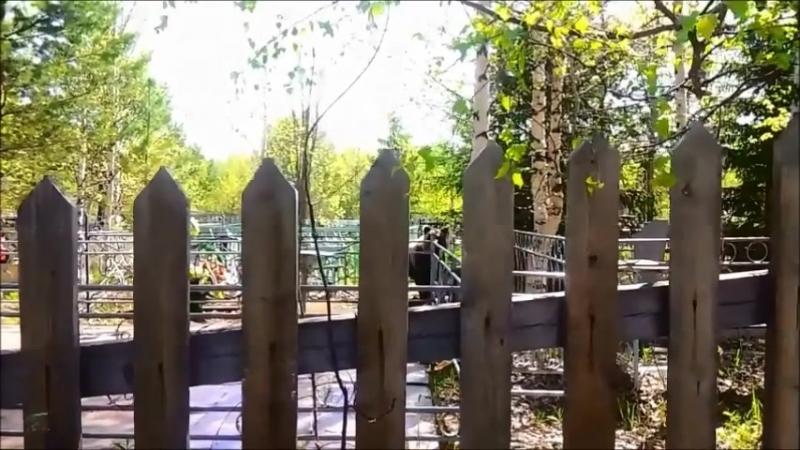 Жители Коми сняли на видео, как в 10 метрах от них ходил медведь