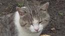 На озере с котом Саймоном