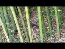 Черный дрозд прячется от жары в тени рощи экоотеля Бамбук Хутор