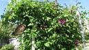 День на даче 1 июля Пашем Кротом Подарки Ягоды Цветы Том Жаба
