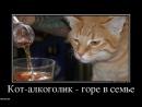 Кот алкоголик, горе в семье