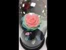 Роза под стеклянным куполом . Живые Стабилизированные Цветы