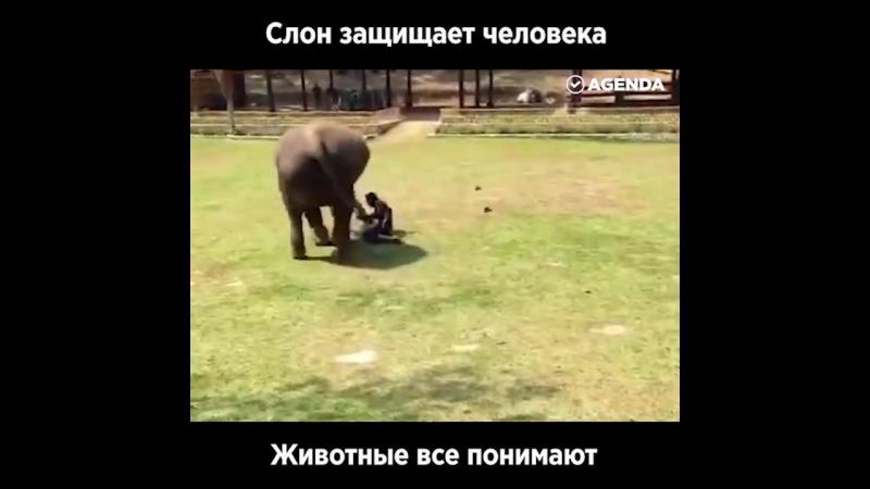 Слон-защитник