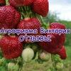 Агрофирма Виктория Пермь ОТЗЫВЫ 🍑