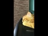 Котик устал и спит