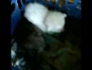 три кота ждут своих хозяев уже пьют молоко