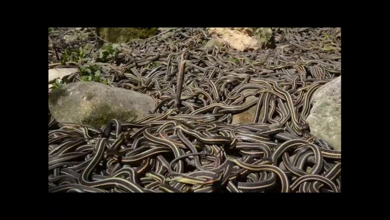One of the largest collections of snakes in the world.480