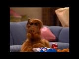 Alf Quote Season 1  Episode 25_Мне повезло