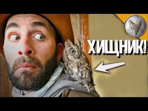 Крошечная СОВКА ПОКУСАЛА и ОБКАКАЛА.(о)v(о).Африканская совка.Brave Wilderness на русском