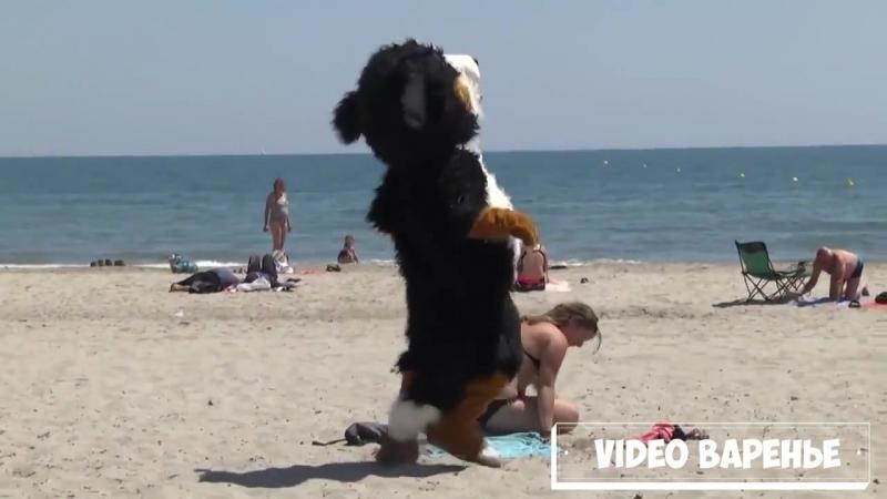 Пёс шалун (VIDEO ВАРЕНЬЕ)