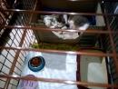 Муся в нашем доме первый день