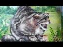 ИСТОРИЯ: кошачий род серия УЗНАЙ МИР. КОШКИ